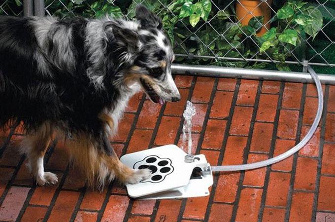 Medium_self-serve-doggie-water-fountain-1